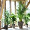 Palmeira, planta do mês de julho