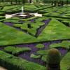 Arte com plantas: Topiaria