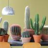 Cactos, planta do mês de junho