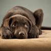 Os cães e a pirotecnia