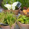Plantas carnívoras na Jardiland