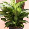 Plantas que purificam o ambiente