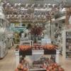 Halloween chega à Jardiland!