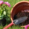 O reenvasamento das plantas de interior