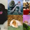 O melhor de 2012: Animais!