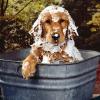 O banho do seu cão