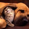 A difícil convivência (ou não) entre animais de estimação