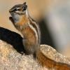 O esquilo como animal de companhia