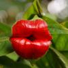 A flor do beijo