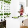 Crie em casa um jardim vertical de plantas comestíveis