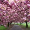 O Jardim Botânico de Brooklin, um paraíso na cidade