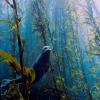 Fotografias impressionantes do mundo subaquático