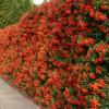 Consiga um jardim seguro