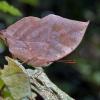 Uma borboleta em forma de folha