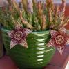 A peculiar flor tigrada da Stapelia variegata