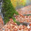 Como aproveitar as folhas secas do outono