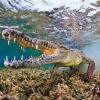 As melhores fotografias da natureza em 2013