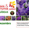 "Workshop ""Orquídeas Vanda"""
