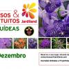 "Workshop ""Orquídeas Vanda"""