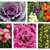 Plantas: cor no inverno!