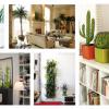 Decore a sua casa com plantas