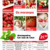 Cultive morangos no seu jardim, varanda ou terraço