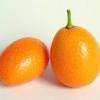 Agora é o momento de plantar Kumquat
