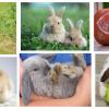 Os coelhos: raças, cuidados e linguagem