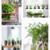 Planta do mês: Samambaia