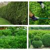 Sebes: um elemento decorativo nos jardins