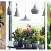 Planta do mês: o jarro