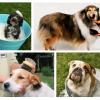 A pelagem do seu cão