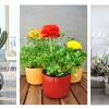 Cuidados a ter com as plantas