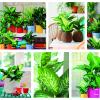 Planta do mês: a Dieffenbachia