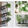 Plantas aromáticas na cozinha