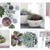 Planta do mês: a Echeveria