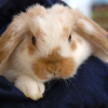 Conheça três coelhos muito curiosos!