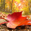 20 Conselhos para cuidar do seu jardim no outono