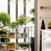 Plantas aromáticas, práticas e muito ambientais