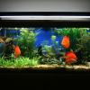 Este mês leve um aquário ao melhor preço!