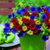 A vistosa combinação de cores das Calibrachoas Trixi®