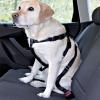 Sabe qual é a melhor maneira de levar o seu cão no automóvel?