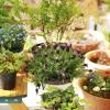 Plantas aromáticas: ideais para o interior da casa ou jardim
