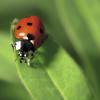 Crie um refúgio para proteger os insetos