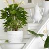 Conhece as plantas gráficas?