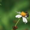 Atraia as abelhas à sua horta… são imprescindíveis!