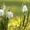 Que bolbos devemos plantar agora para ter lindas flores na primavera?