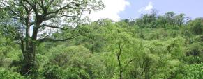 Hoje celebramos o Dia Mundial das Florestas