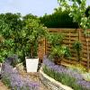 Frutas para dar sabor ao seu jardim