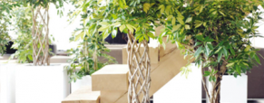 Schefflera, planta do mês de Janeiro